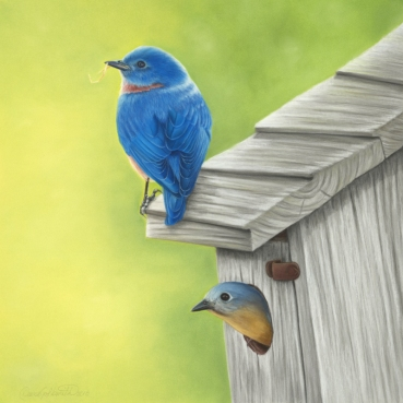 Eastern Bluebirds