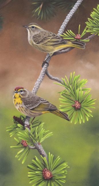 Palm Warblers